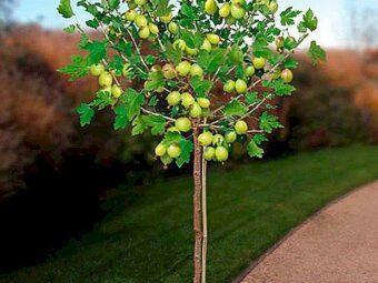 geltonas agrastas medžio formos