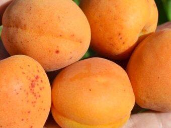 abrikosas