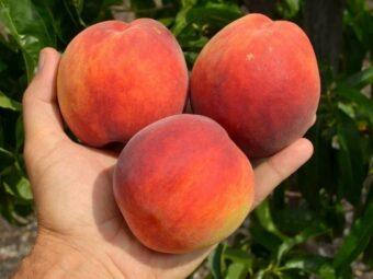 persikas inka